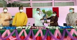 বাগাতিপাড়ায় বৃক্ষ রোপন অভিযানের উদ্বোধন