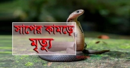 নলডাঙ্গায় সর্প দংশনে গৃহবধূর মৃত্যু
