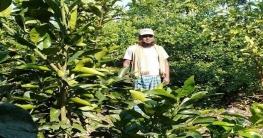 বাগাতিপাড়ায় মাল্টা চাষে ব্যাপক সাফল্যের সম্ভাবনা