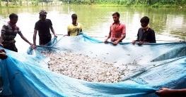 সিংড়ায় মাছ চাষে বেকারত্ব দূর করলেন রুস্তম আলী
