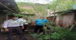নলডাঙ্গায় গোপনে গাঁজার চাষ ধরে ফেললেন ইউএনও