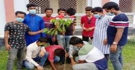 বাগাতিপাড়া উপজেলা ছাত্রলীগের দ্বিতীয় দফা বৃক্ষরোপন কর্মসুচি