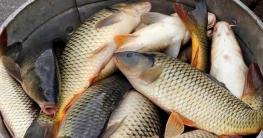 গুরুদাসপুরে মাছ চাষে নীরব বিপ্লব