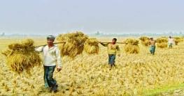 খাদ্যশস্য উৎপাদনে বাংলাদেশ এখন বিশ্বে উদাহরণ